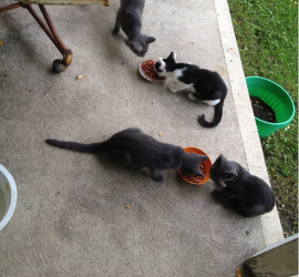 Little Ones - Four finally decide to eat together so I can take a pic